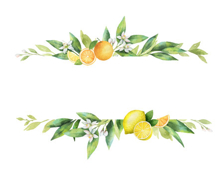 Watercolor vector banner of citrus fruits and leaves. Vettoriali