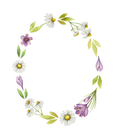 Watercolor vector wreath of chamomile flowers, saffron and green leaves on a white background.
