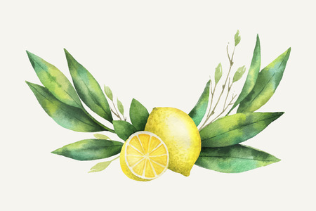 Watercolor vector hand drawn wreath with lemon and leaves. Çizim