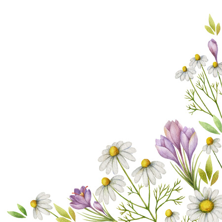 Watercolor vector card of chamomile flowers, saffron and green leaves on a white background.