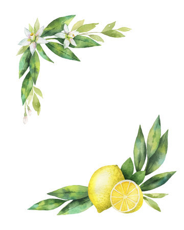 Watercolor vector hand drawn wreath with lemon and leaves. 向量圖像