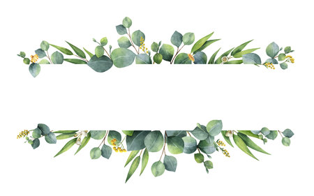 Watercolor vector green floral banner with silver dollar eucalyptus leaves and branches isolated on white background. Vettoriali