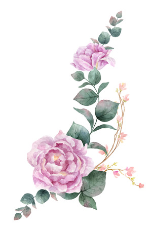 Watercolor vector hand painting illustration of peony flowers and green leaves.
