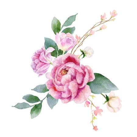 Ilustración de pintura de mano de vector acuarela de flores de peonía y hojas verdes. Ilustración de vector