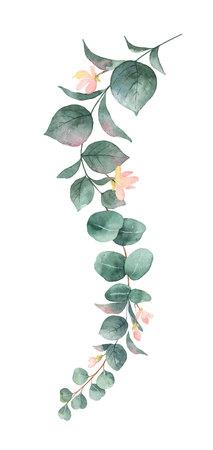 Foglie di eucalipto dollaro d'argento dipinto a mano di vettore dell'acquerello e fiori rosa. Illustrazione floreale isolato su sfondo bianco.