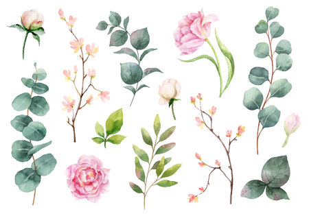 Watercolor vector hand painting set of peony flowers and green leaves. Spring or summer flowers for invitation, wedding or greeting cards. Ilustração Vetorial