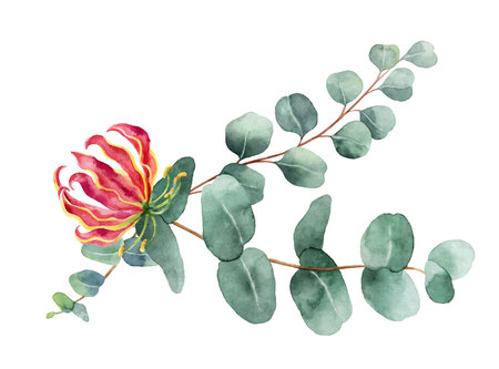 Watercolor vector branches with green eucalyptus and exotic flower. Spring or summer flowers for invitation, wedding or greeting cards. Illustration