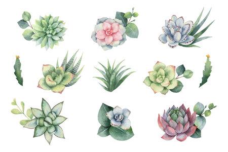 Aquarel vector set met eucalyptus bladeren en vetplanten. Illustratie voor huwelijksuitnodiging, bewaar de datum of groetontwerp. Lente- of zomerbloemen met ruimte voor uw tekst.