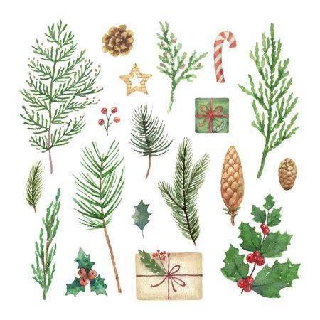 Insieme di Natale di vettore dell'acquerello con rami, bacche e foglie di conifere sempreverdi. Illustrazione per il tuo design di vacanza isolato su uno sfondo bianco. Vettoriali