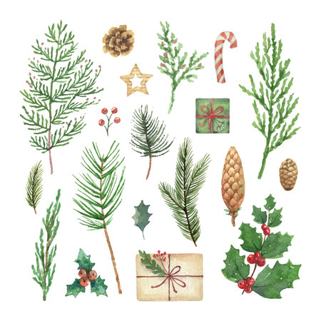 Watercolor vector Christmas set with evergreen coniferous tree branches, berries and leaves. Illustration for your holiday design isolated on a white background. Illustration