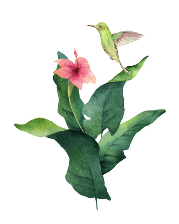 Watercolor vector card tropical leaves, hummingbird and flowers isolated on white background. Illustration for design wedding invitations, greeting cards, postcards.