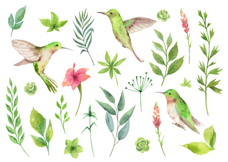 Watercolor vector hand painted set with green leaves and Hummingbird. Floral illustration isolated on white background. Ilustração