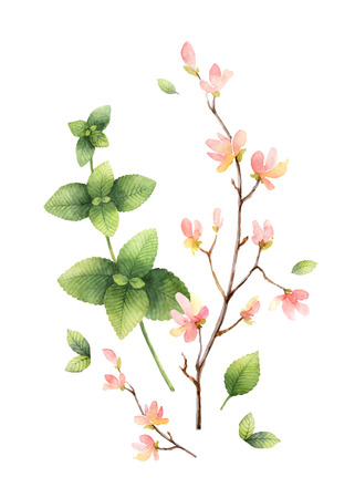 Watercolor vector hand painting illustration with pink flowers and green mint leaves. Spring or summer flowers for invitation, wedding or greeting cards.