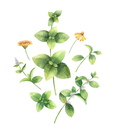 Watercolor hand painting set of flowers and green leaves.