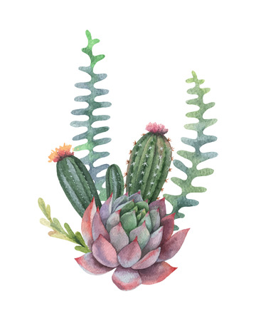 Watercolor  bouquet of cacti and succulent plants isolated on white Ilustrace