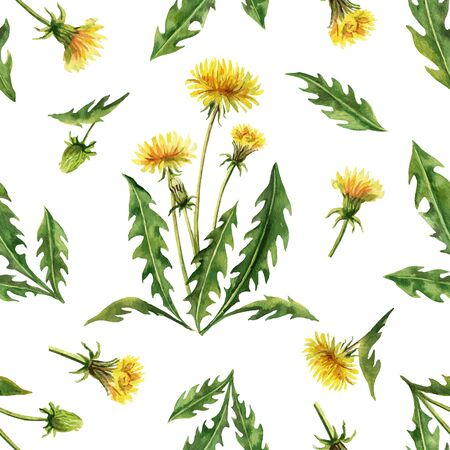 Watercolor vector seamless pattern with dandelion flowers and leaves isolated on white background. Illustration for wallpaper design, botanical drawing, textile, packaging and decorative print.