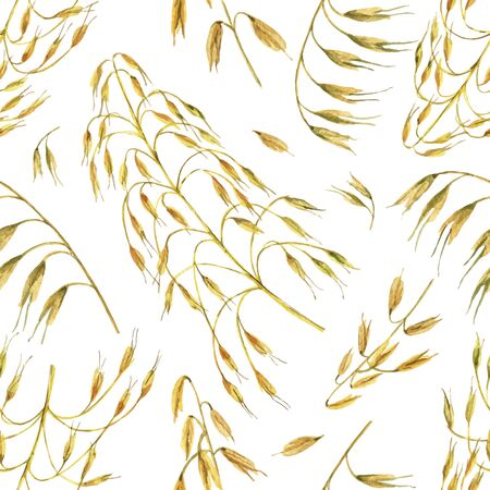 Watercolor vector seamless pattern with Oatstraw isolated on white background. Illustration for wallpaper design, botanical drawing, textile, packaging and decorative print.
