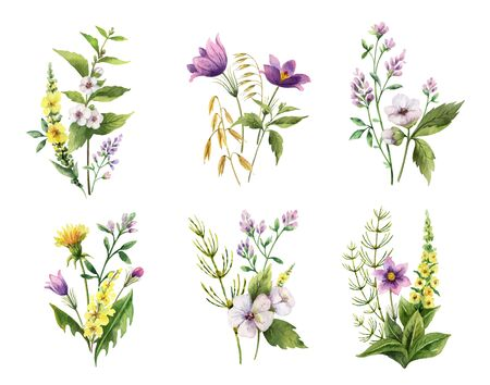 Watercolor hand painted vector set of bouquets with field flowers. Illustration for cards, wedding invitation, beauty store, decoration element, natural and organic products, romantic design..