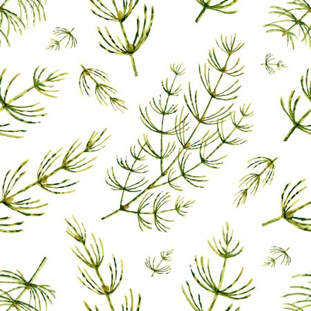 Watercolor vector seamless pattern with Horsetail flowers and leaves isolated on white background. Illustration for wallpaper design, botanical drawing, textile, packaging and decorative print.