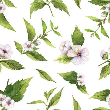Watercolor vector seamless pattern with Marshmallow flowers and leaves isolated on white background. Illustration for wallpaper design, botanical drawing, textile, packaging and decorative print.
