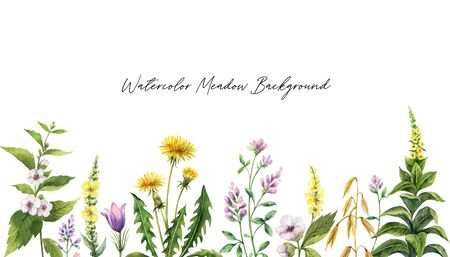 Watercolor hand  painted banner with field flowers. Ilustracja