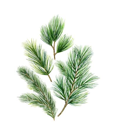 Christmas vector card with green fir branches isolated on white background. Illustration for greeting cards, banners, invitations, calendars.