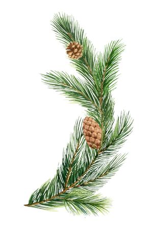 Watercolor vector green spruce branch, Christmas tree. Illustration for greeting cards and invitations isolated on white background.