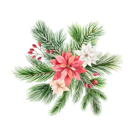 Christmas vector arrangement with green fir branches and flowers of poinsettia isolated on white background. Illustration for greeting cards, banners, invitations, calendars.