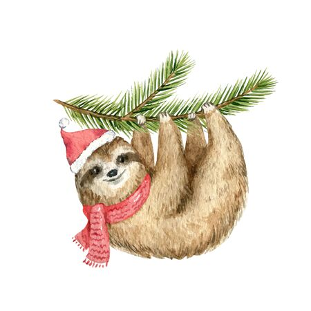 Watercolor vector Christmas card cute Sloth hanging on a fir branch. Cartoon illustration for greeting cards, poster template and invitations isolated on white background. Holiday decoration.