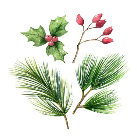 Christmas vector set with green pine branches and red berries isolated on white background. Illustration for greeting cards, banners, invitations, calendars.
