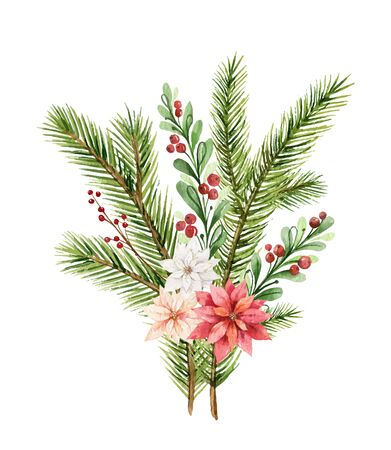 Watercolor vector Christmas bouquet with fir branches and flowers of poinsettia. Illustration for greeting floral postcard and invitations isolated on white background.