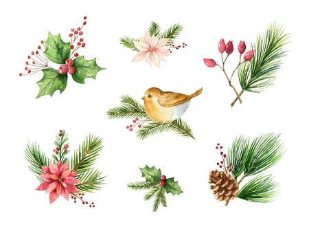 Watercolor vector Christmas set of decorative compositions of green spruce branches, poinsettia flowers, cones, red berries and birds. Illustration for your holiday design isolated on a white background.