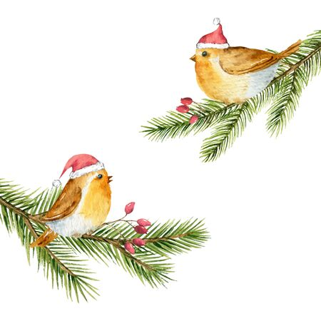 Vector watercolor Christmas card with birds on a green spruce branches. Illustration for greeting floral postcard and invitations isolated on white background.