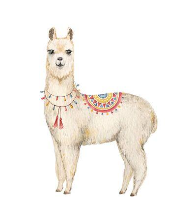 Watercolor hand drawn Llama or alpaca.