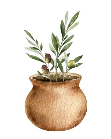 Watercolor vector card with olive branches in a ceramic pot. Hand drawn illustration for kitchen decor, natural cosmetics, invitations and printing.