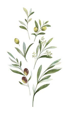 Aquarellvektorstrauß aus Olivenzweigen und Blumen. Vektorgrafik