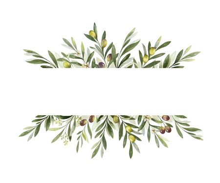 Watercolor vector banner of olive branches and leaves isolated on white background. Floral illustration for wedding stationary, greetings, wallpapers, fashion and invitations