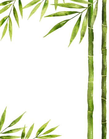 Watercolor vector bamboo stem with green leaves and copy space isolated on white background.