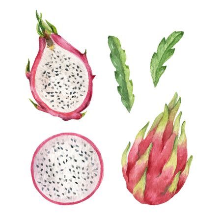 Watercolor vector hand pink painted dragon fruit set.