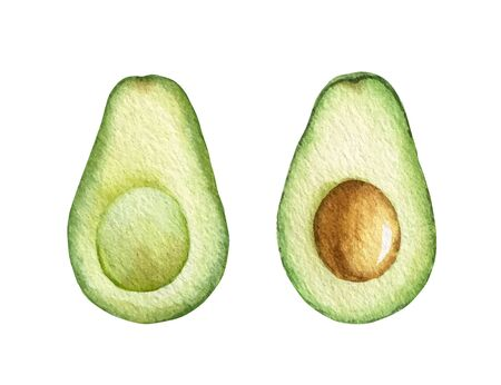 Watercolor vector hand painted jucy avocado fruit set. Ilustracja