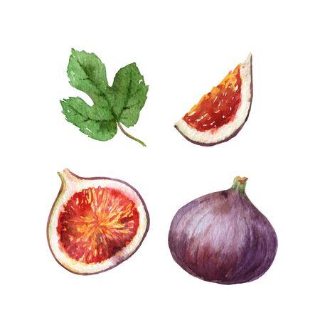 Akwarela wektor ręcznie malowany zestaw owoców soczysta figa. Ilustracje wektorowe