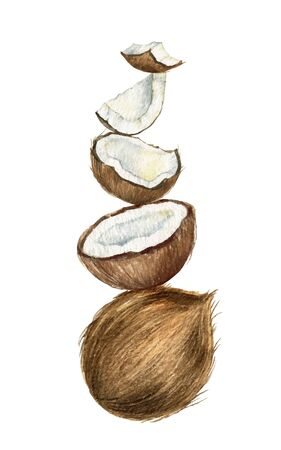 Watercolor vector hand painted composition of coconut. 向量圖像