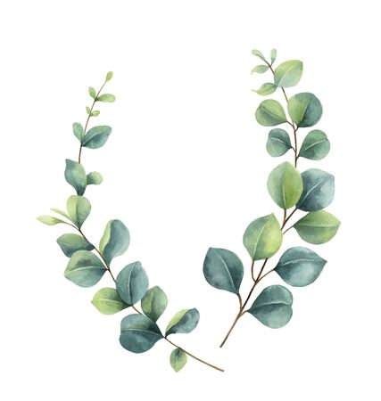 Watercolor vector wreath with green eucalyptus leaves and branches. Vektorgrafik