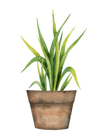 Watercolor vector card with a lemon grass in a ceramic pot. Illustration