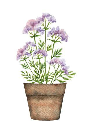 Watercolor vector card with a valerian in a ceramic pot.