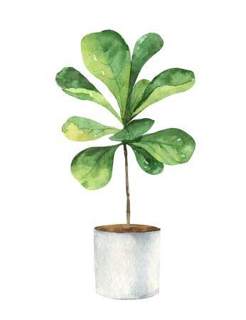 Watercolor vector clipart with a ficus lyrata in a ceramic pot.