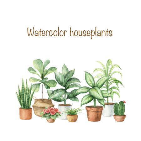 Watercolor vector set with home plants in ceramic pots. Plant lady card. Hand painted illustration for decor, stationary, postcards, packaging, invitations, kitchen and gardening. Decorative collection isolated on white background..