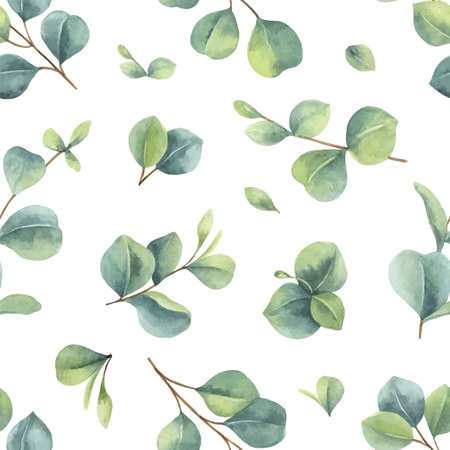 Watercolor vector hand painted seamless pattern with green eucalyptus leaves. Ilustração