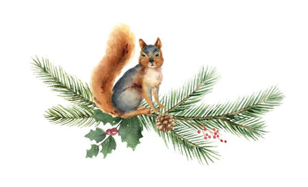 Watercolor vector Christmas card with squirrel and fir branches.