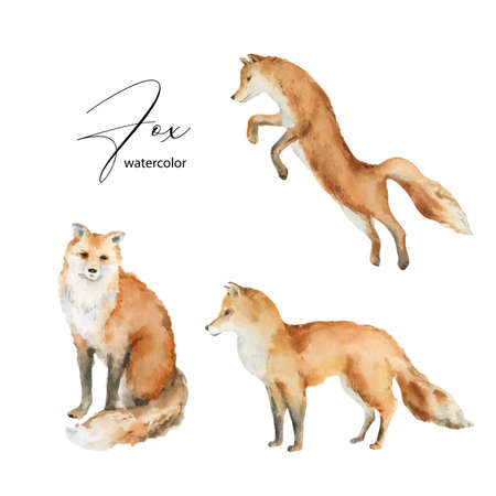 Watercolor vector set of Fox isolated on a white background. Ilustração